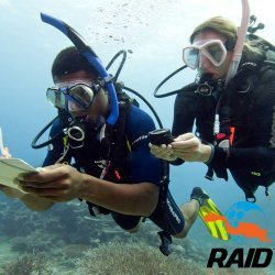 RAID Advanced 35 Diver